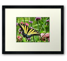Yellow Tiger Swallowtail  Framed Print