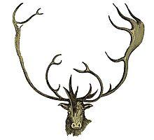 Elk head antlers by surgedesigns