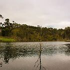 Lone Tree in the Lal Lal Reservoir - Lal Lal Falls by Andrew Dodds