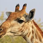 Giraffe - African Wildlife Background - Colorful Solitude by LivingWild