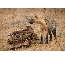 Young Spotted Hyena Photographic Print