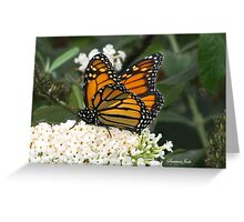 A Monarch on a Buddleia Blossom Greeting Card