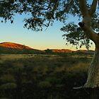 Pilbara Sunset by Nicola Morgan
