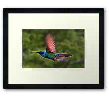 Flight Of The Hummingbird Painting Framed Print