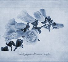 Common Foxglove Cyanotype by John Edwards