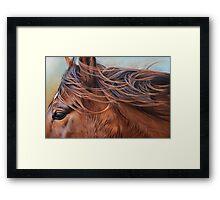Wind in the mane Framed Print