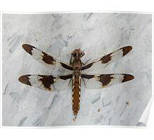 12 Spot Skimmer Resting Poster