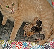 Proud Mama Tells Me To Admire Her Kittens by Jane Neill-Hancock