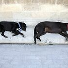 Two Dogs Sleeping in Crete by Kawka