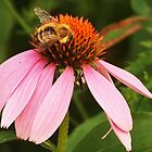 Bee on Coneflower by Linda  Makiej Photography