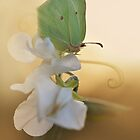 Green butterfly on the white sweet pea by JBlaminsky