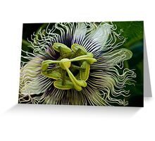 White passion Greeting Card