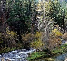 Flowing through Spearfish Canyon by Graeme  Hyde