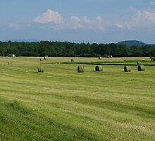 Hay In Vermont by Gary Benson
