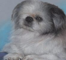 "Old one-eyed ""Bandit"" in pastels by Pam Humbargar"