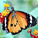 Hecales Longwing watercolour by PhotosByHealy