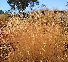 Spinifex Plateux by Nicola Morgan