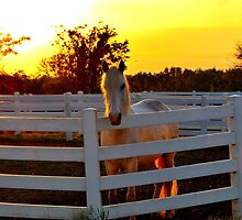 Pony at Sunset by April Neumann