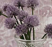 Chive Bouquet by Sandra Foster
