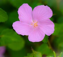 Pink Flower by AhArtography