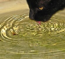 Ripples in a waterbowl by Lee Jones