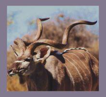 Kudu Bull - African Wildlife Background - Spiral Pride Kids Clothes