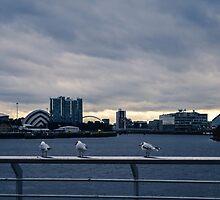 Three Cheeky Birdies by Stevie B