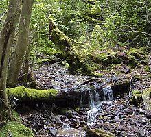 Woodland Stream by John Thurgood
