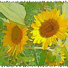 Sunflowers by Kenneth Hoffman