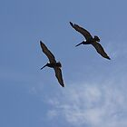 pelicans in the breeze by DAngelo982
