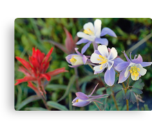 Colorado Blue Columbine Canvas Print