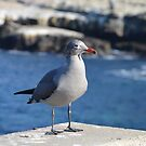 Juvenile Seagull ~ La Jolla, California (on new products) by Marie Sharp