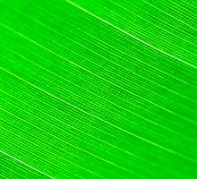 Macro shot of green leaf, nature pattern background by Stanciuc