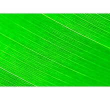 Macro shot of green leaf, nature pattern background Photographic Print