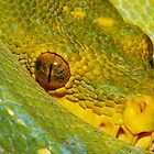 Green Tree Python2 by serpentscales
