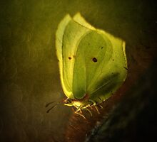 Yellow butterfly on the moss by JBlaminsky