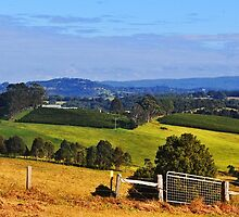 View To Byron Bay by Margaret Stevens