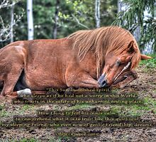Arabian Quarterhorse Pony Asleep by Skye Ryan-Evans