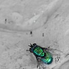 Green fly, grey wall by MistyIslet