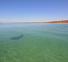 Shark Bay by Nicola Morgan