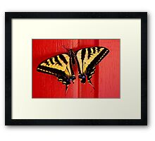 tiger swallowtail butterfly on unusual background Framed Print
