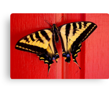 tiger swallowtail butterfly on unusual background Canvas Print