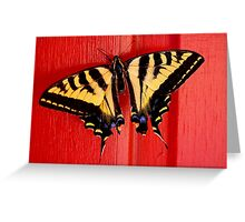 tiger swallowtail butterfly on unusual background Greeting Card