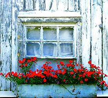 Flowers In The Window by Jamie Greene