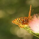 Great Spangled Fritillary by Linda  Makiej