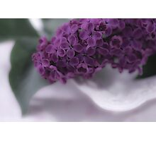 Lilac Love Photographic Print