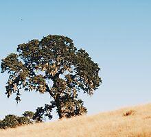 Tree by Santamariaa