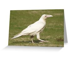 """""""Dare To Be Different"""" (Rare White Raven) Greeting Card"""