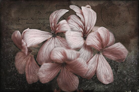 Pink Geranium by Elaine Teague