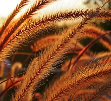Late Afternoon Sun in the Giant Fountain Grass by Gilda Axelrod